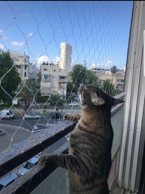 רשת להגנה על חתולים