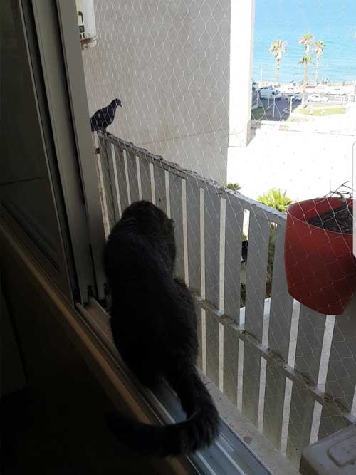רשת לחתולים