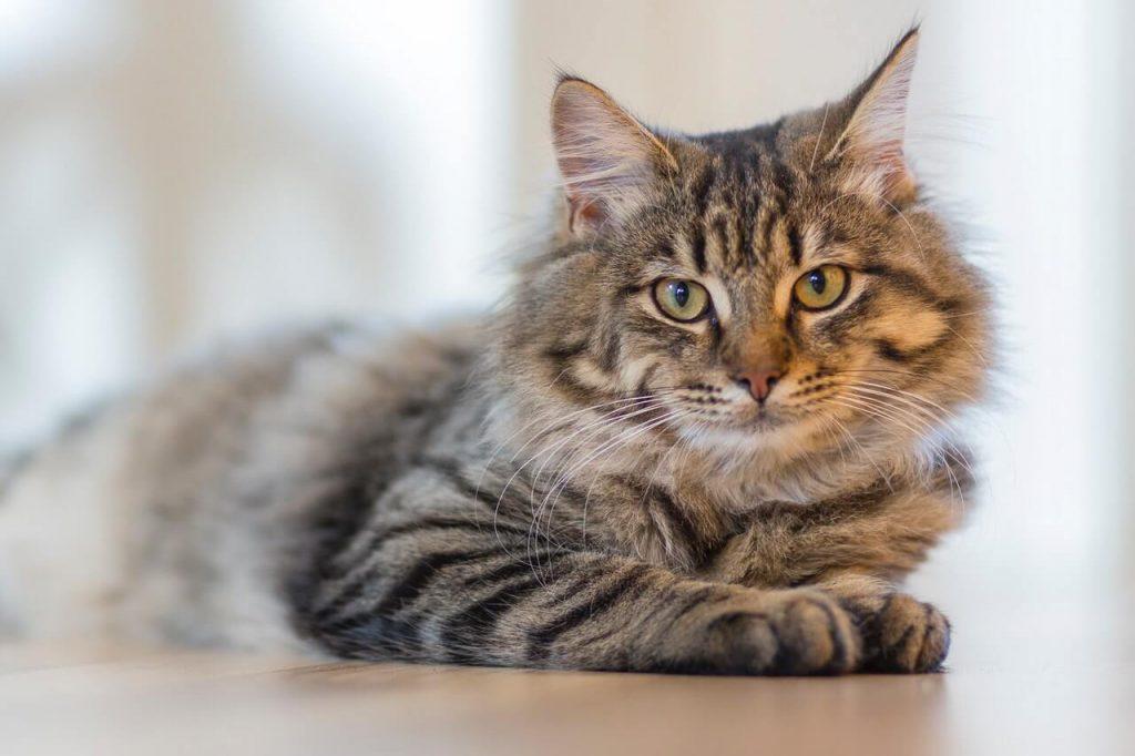 רשת הגנה לחתולים